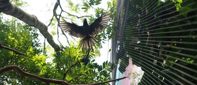 Maior viveiro da América Latina recebe quase 300 aves resgatadas